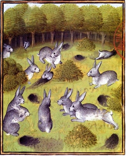 מתוך מדריך הציד של גסטון פבו, המאה הארבע עשרה.
