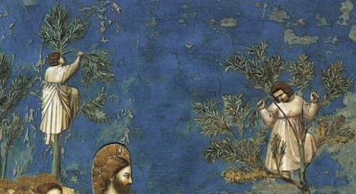 """ג'וטו, פרט מתוך הכניסה של ישו לירושלים. ילדים מטפסים על עצים כדי לראותו. כמעט השתמשתי בציור הזה לכריכה של """"טבע דומם""""."""