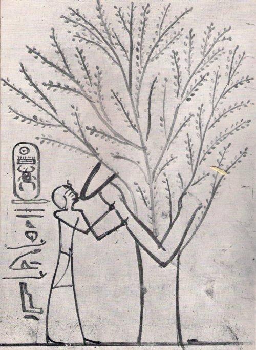 איש יונק מעץ, מצרים העתיקה, מתוך הפוסט הזה