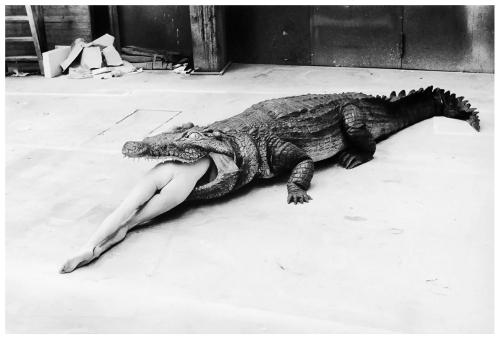 """""""קרוקודיל טורף בלרינה"""", מתוך Keuschheitslegende (אגדת הבתולין) 1983 של פינה באוש, צילם הלמוט ניוטון"""